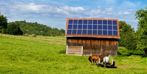Solarzellen in der Natur