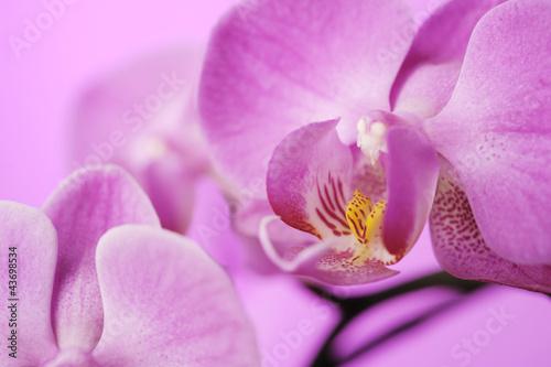 Fototapeten,orchidee,blume,blume,makro