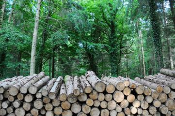 long log pile
