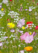 flower bed with wild meadow flowers