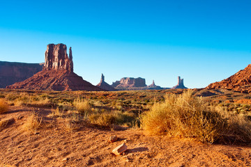 monument valley bush