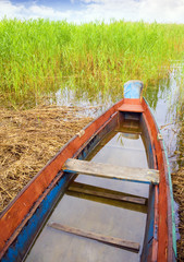 boat in a high cane