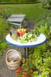 Erntezeit im Gemüsegarten