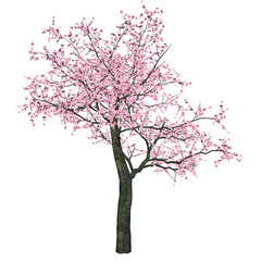 Pink Cherry Tree (Sakura)