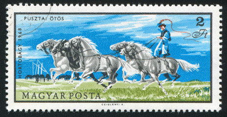 raider with horses