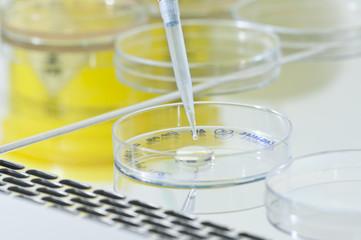 Placa de cultivo de bacterias