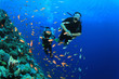 Female Scuba Divers swim through tropical fish on ocean reef