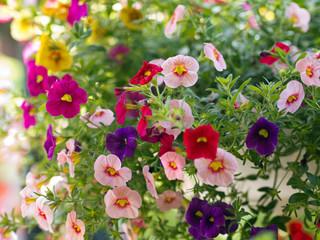 Garten - Blumen