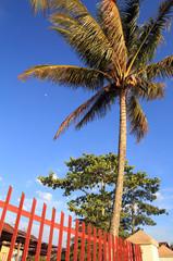 Coconut Trees,Indonesia