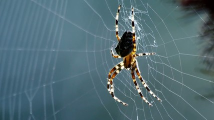 Close-up of spider on net moving in calm wind
