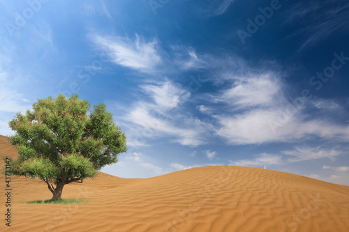 desert and tree