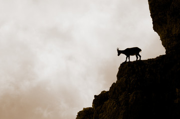 Mountain goat silhouette on the Apls