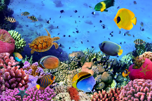 Photo of a coral colony - 43735584