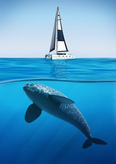 Whale swimming underwater yacht, summer holiday