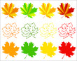 Set of autumn maple leaves - eps8