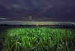 Leinwandbild Motiv night cornfield