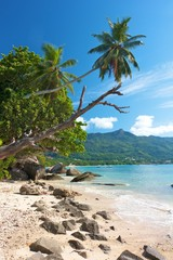 Palm reaching over a lonely beach and bay , Seychelles