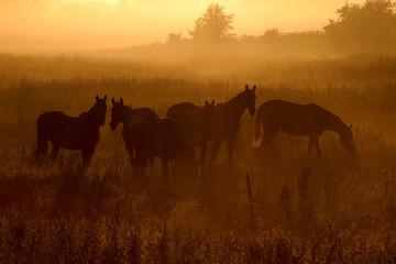 Konie o świcie