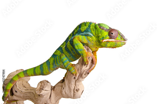 Deurstickers Kameleon Colorful chameleon