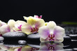beautiful set of gorgeous orchid on stones reflection