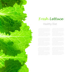 Fresh Lettuce Border /  leaves isolated on white
