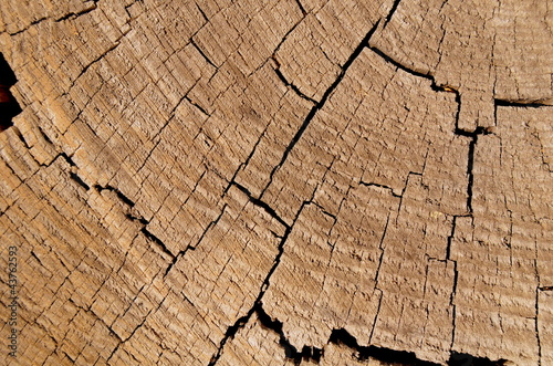 Closeup Background Of Cracked Cut Tree Trunk