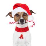 christmas dog - Fine Art prints