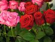 Rote Rosen, rosa, Symbol für Liebe, Rosenstrauß, Floristik
