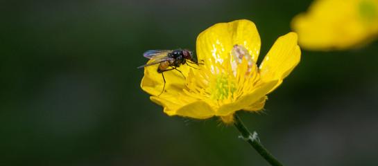 summer fly
