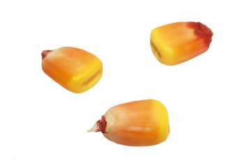 Macro kernel corn isolated on white background