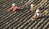 asian women plant seeds to the land