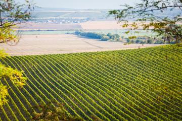 Vineyard with nearby fields in Palava, Czech