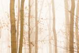 Fototapete Bramkofel - Hell - Wald