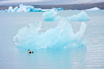 duck iceberg