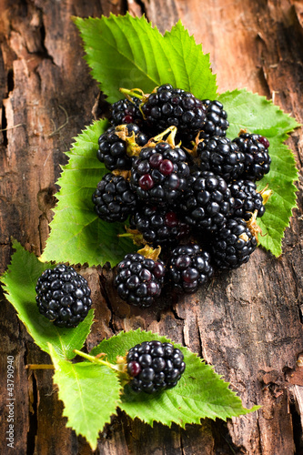 Blackberry on bark background