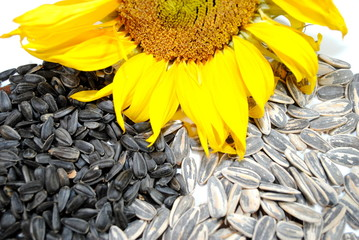 Sunflower and Seeds