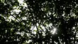Forest with sun behind green leaves