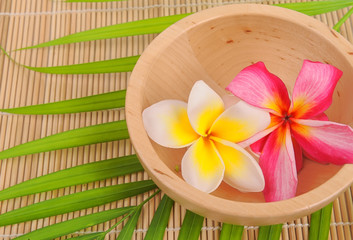 plumeria flowers closeup on green leaves with wood bowl