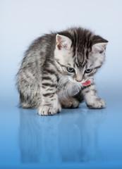 Britain's little kitten