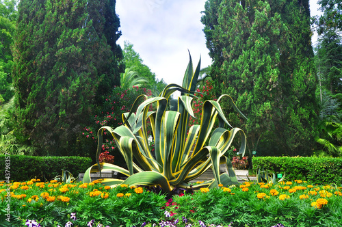 Agave and marigolds in Sochi Arboretum