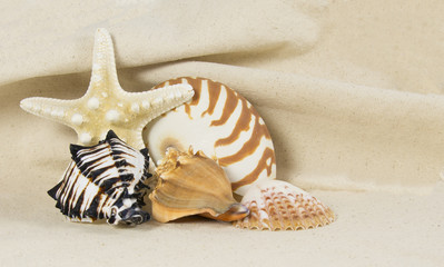 sea shell still life