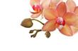 Fototapeten,orchid,cymbidium,wellness,kosmetik