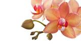 Fototapety Orchideen