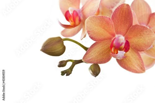 Fototapeten,orchidee,orchidee,wellness,cosmetic
