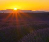 Fototapety Lavendelfeld Sonnenuntergang 01