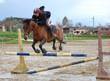 cheval qui saute mais fait tomber la barre