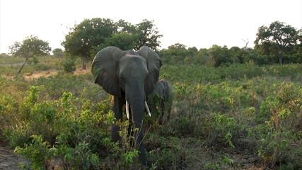 Elefantenmama mit Kind
