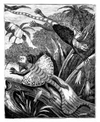 A lizard : the Pegasus-Dragon