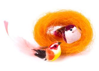 Color little birds in nest on white