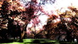 Japanese Garden Cherry Blossoms Tree 3D render
